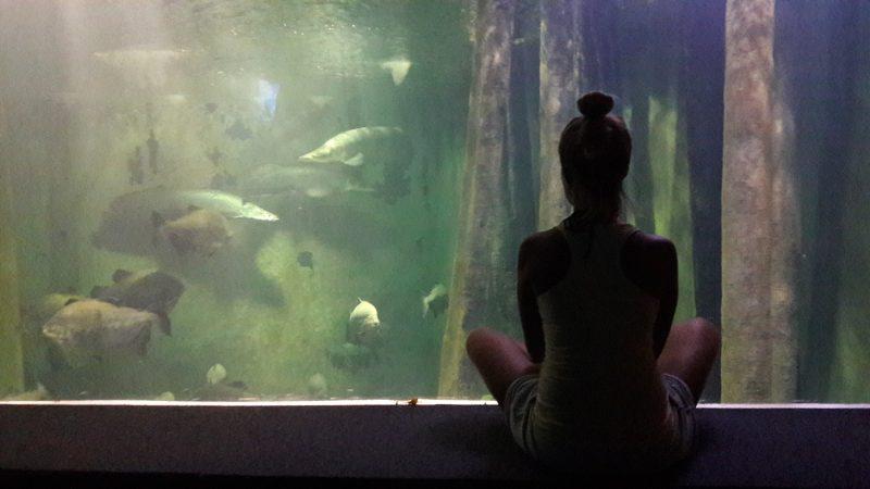 Sladkovodné akvárium (Acuario de Zaragoza)