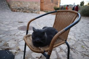 Anento mačka