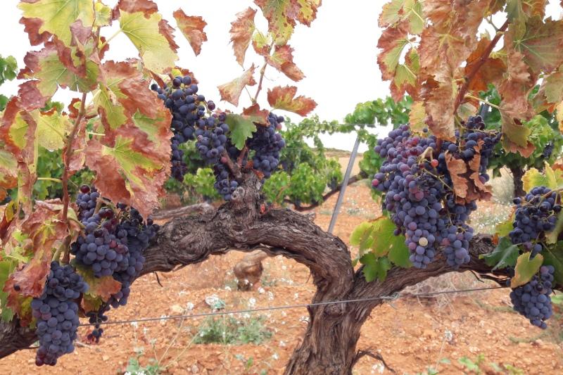 Vinny festival Logrono