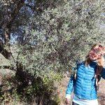 Cesta z Beceite, Matarrana, Španielsko