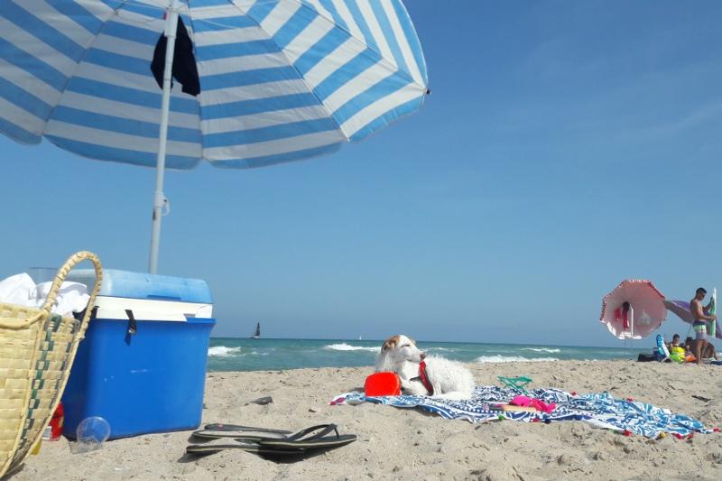 Playa del Saler