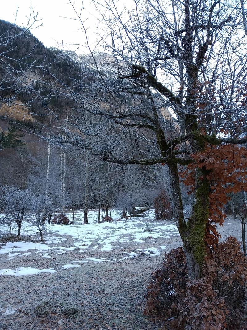 Príroda Pyrenejí